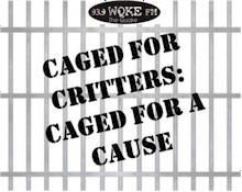 Caged For Critters Fundraiser. Our President and Shelter Director are caged in a dog kennel at the intersection of two busy streets. We set up in the McDonalds parking lot there. They feed the volunteers all kinds of salads, because they figure we bring them business. The 2 people will be let loose only after we raise $10,000. We have several dignitaries from the city who spend some time with them in the kennel: