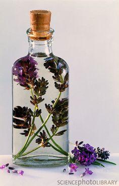 Lavender in corked bottle