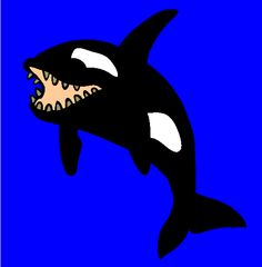 killerwhale coloring page