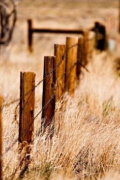 128 Best Old Fence Post Rusty Barbed Wire Images On Pinterest