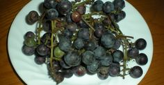 The 3 Foragers: Foraging for Wild, Natural, Organic Food: Wild Grape Recipe - Grape Jam