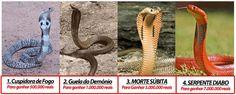 4 snakes copy