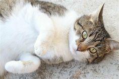 Am acasă o pisică tare ciudățică. Se spune că animalele seamănă cu stăpânii …mmm…asta nu a sunat deloc în favoarea mea. Spun că este ciudățică din două motive: în primul rând am ajuns să o plac (nu-s așa mare fan pisici) și cel de-al doilea motiv pentru care o consider ciudățică se datorează fa... Life Thoughts