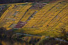 Colors in November