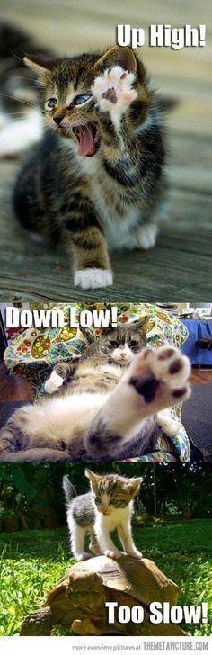 Meow FIVE!