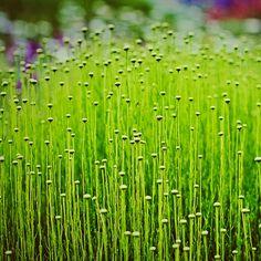 Green shoots