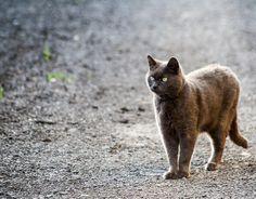 Seeking for prey | Flickr - Photo Sharing!