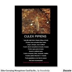 Zika-Carrying Mosquitoes Card by RoseWrites