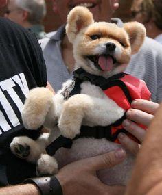 Too cute!!!!!!!!!!