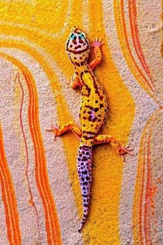 This gecko even has the Leo sign on its back! Leopard Gecko On Rainbow Slate. photo by bob jensen Beautiful Creatures, Animals Beautiful, Cute Animals, Baby Animals, He's Beautiful, Animals Images, Beautiful Patterns, Funny Animals, Beautiful Pictures