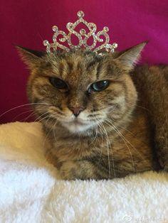 #queen #cat