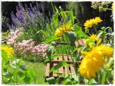 Godecja wielkokwiatowa zogrodemnaty9