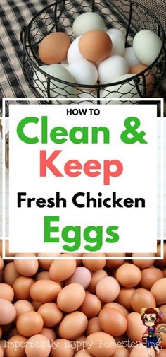 Fresh Eggs - How to clean, keep (store) and the determine freshness of chicken eggs from your homestead or backyard hens.