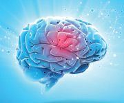 How L-Theanine Works in the Brain to Block Anxiety and Stress