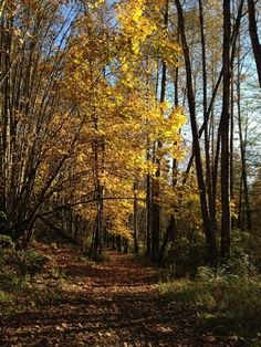 The trees are still wearing their lovely fall colors at Lord Hill Regional Park.