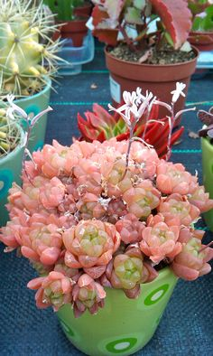 ✿* Cactus *✿* Suculentas *✿