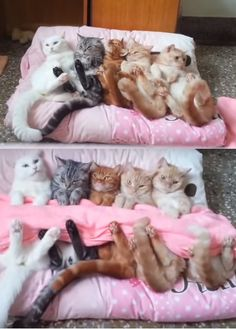She Gets Her Cats Ready For Bed, Now Watch How She Does It… Can You Believe It?! (VIDEO) #cats #animals #pets
