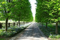 If we have to live way back on the hill, and we have a lot of money, this should be our driveway :)