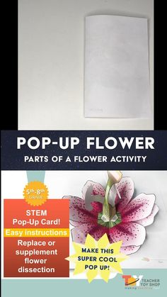 DIY science craft for kids! Build and label the parts of a flower with the diagram. Printable activity results in a STEM model of the plant. Use this project in any lesson for 4th grade, 5th grade, 6th grade, 7th grade or 8th grade. Great for interactive notebooks on the anatomy of a flower and plant reproduction. Upper Elementary Resources, Elementary Science, Science Classroom, Science Education, Kids Education, Stem Projects, Science Projects, Science Experiments, Science Crafts For Kids