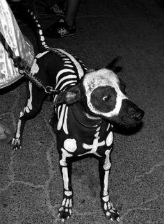 Halloween-dog yes i will try this