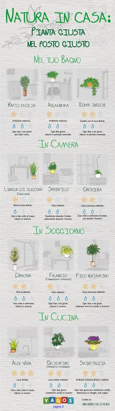 Never question how much sunlight your spider plant needs again. Never question how much sunlight your spider plant needs again. Never question how much sunlight your spider plant needs again. Plantas Indoor, Decoration Plante, Diy Decoration, Art Decor, Plant Needs, Finding A House, In This House, Buy House, My New Room