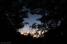 漆黒の森。