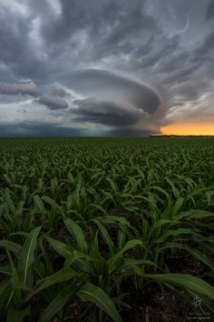 "UFO - ""UFO"" Tornado warned supercell over a cornfield. north of Huron, South Dakota, © Aaron Groen. Beautiful Photos Of Nature, Beautiful Nature Wallpaper, Nature Images, Nature Photos, Beautiful Places, Amazing Nature, Big Island Volcano, 6d Canon, Tornado Warning"