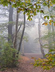 Eastham Woods, Wirral