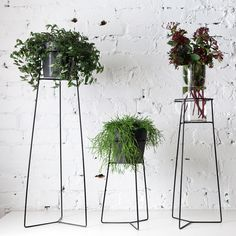 Pot Plant Stands - Black By Trestle Union Online Gift Store, Vase With Lights, Cactus, Flower Stands, Foliage Plants, Plant Holders, Plant Decor, Decoration, Houseplants