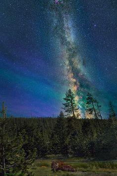 ☀ Yellowstone Park USA*