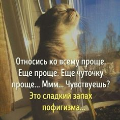Russian Humor, Russian Quotes, Funny Cats, Funny Animals, Funny Jokes, Wisdom Quotes, Life Quotes, Birthday Greeting Message, Good Morning Beautiful Flowers