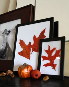 Decorating for Fall: Framed Autumn Leaves