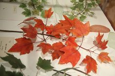 Blaschka Red Maple in Glass Flowers,  Harvard Museum of Natural History