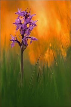 ~ glowing meadow ~ Autor: Markus Gebel