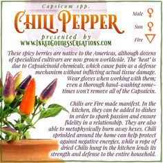 The spelling of this plant's name varies by locale, but no matter what you call it, handle it with care! Potency can vary by species, by individual pepper, and even by areas in a single pepper. #kitchenwitch #fire #chili #pepper #fire #sun #protection #passion #hexes #magick Kitchen Witchery, Magick, Chili, Spicy, Berries, Herbs, Stuffed Peppers, Dishes, Canning