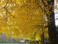 Golden autumn in Florence