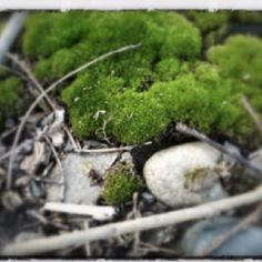 Moss and stones