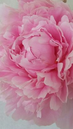 peonies artificial flowers with vase Peonies And Hydrangeas, Pink Peonies, Peonies Bouquet, Yellow Roses, Pink Roses, Amazing Flowers, Beautiful Flowers, Exotic Flowers, Purple Flowers