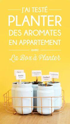 J'ai testé : planter des aromates en appartement alors que je n'ai ni jardin ni balcon ! Venez découvrir mon expérience de jardinage en intérieur avec la Box à Planter !