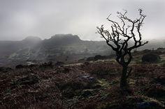 A foggy morning on Dartmoor.