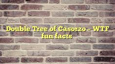 Double Tree of Casorzo - WTF fun facts - http://thisissnews.com/double-tree-of-casorzo-wtf-fun-facts/