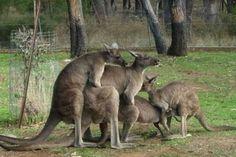 Les choses complètement fous Vu en Australie (30 photos)