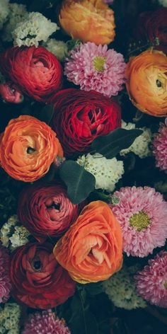 The meaning behind popular Valentine's Day flowers - Blumenbilder - Flower Meanings, Deco Floral, Floral Design, Flower Wallpaper, Pretty Flowers, Romantic Flowers, Most Beautiful Flowers, Beautiful People, Planting Flowers