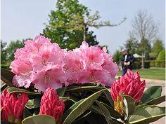Rhododendronpark im Park der Gärten - Bad Zwischenahn am Meer