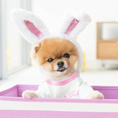 Happy Easter 🐰 @jiffpom #CottonOnKidsUSA Cute Little Puppies, Cute Little Animals, Cute Puppies, Cute Dogs, Jiff Pom, Kids Usa, Baby Animals Pictures, Dog Training Techniques, Teacup Puppies