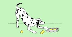 """Dog owners are often told, """"A tired dog is a good dog."""" One of the ways to accomplish that is brain games. Here are a couple to tire your dog out."""
