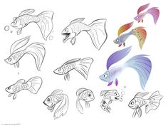 Fishes by Andrea Fernandez  — Animal character design, drawing references for artists
