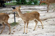 Photos by Maiju: Khao Kheow Open Zoo Thailand