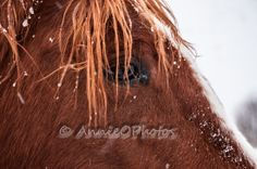 Eye of the Equine off for the rest of April! Equine Photography, Rest, Horses, Long Hair Styles, Beauty, Horse Photography, Long Hairstyle, Long Haircuts, Long Hair Cuts