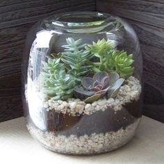 finished terrarium  I like the jar, might look better with darker pebbles on the bottom and light ones on top